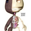"Jason Freeny ""Sackboy Anatomy"" illustration based on Sackboy ©Sony/Media Molecule 388x600px"