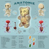 "Jason Freeny ""Gummi Anatomie"" illustration 600x600px"