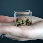 Worlds Smallest Aquarium - that's how small it is 640x420px