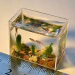 Worlds Smallest Aquarium - against a ruler as prove of its size 640x420px
