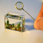 the world's smallest aquarium contains only 10ml of water