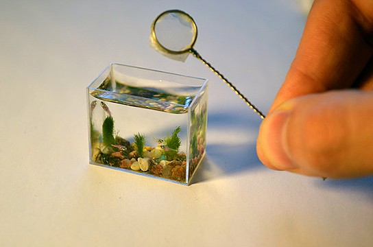 Worlds Smallest Aquarium main 544x360px