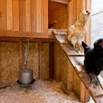 Cedar chicken coop condo 800x533px