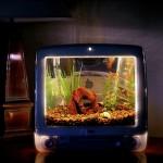 Macquarium is an aquarium at heart but in a G3 iMac body