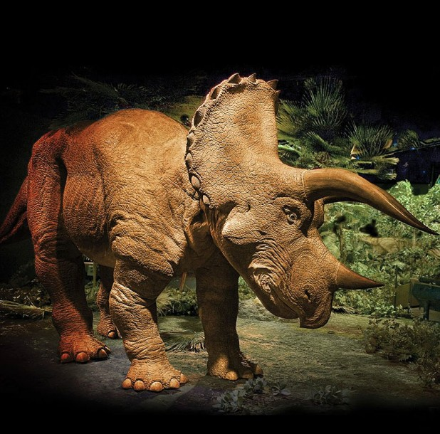 The 20 Foot Animatronic Triceratops