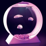 forget about fish tank, check out this Desktop Jellyfish Tank