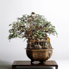 Takanori Aiba's Bonsai Art(chitecture) - Bonsai-A