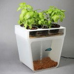 Home Aquaponics Kit