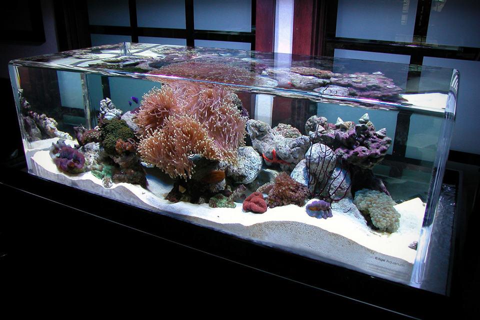 zeroedge classic 46 rimless aquarium mikeshouts