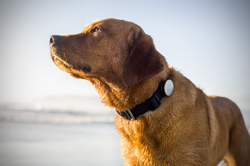 Wearable Tech, Pet Care, Whistle Labs