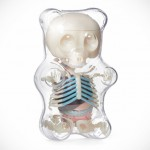 4D Master Anatomical Gummi Bear by Jason Freeny