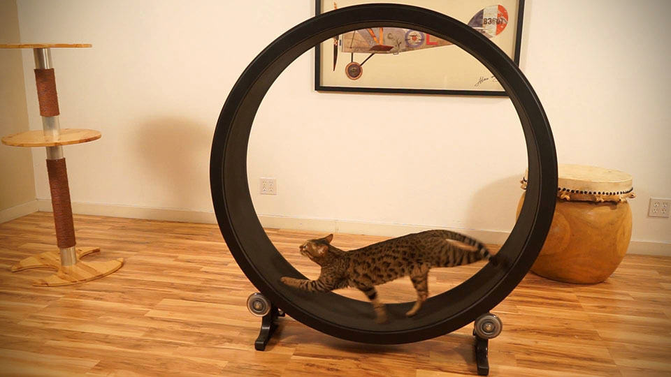 One Fast Cat Is A Giant Hamster Wheel For Your Cat That ...