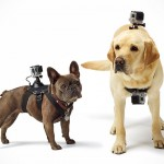 You Had Your Fun With GoPro, Now Let Your Dogs Have A Go Too With Fetch GoPro Mount For Dogs