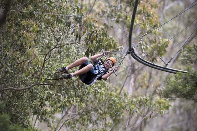 TreeTop Crazy Rider