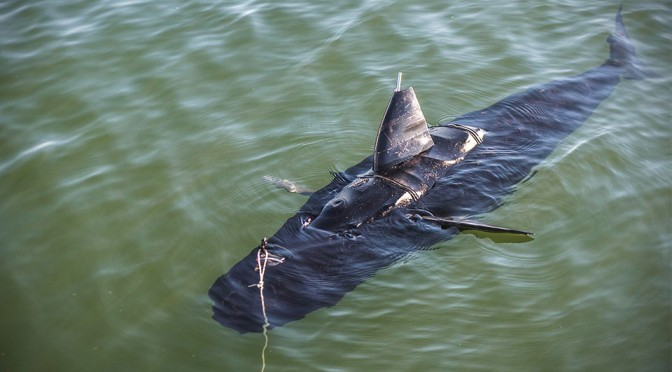 U.S. Navy's New Underwater Robot Takes On The Likeness of a Shark and Behaves Like One Too