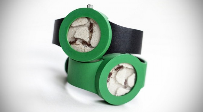 Ant Watch by Analog Watch Co.