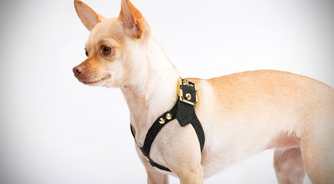 Brikk Introduces Lux Buddy Belt Dog Harness, the Ultimate Opulence for Your Canine Friend