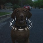 Dog Collar Goes High-tech with This All-in-One Smart Dog Collar