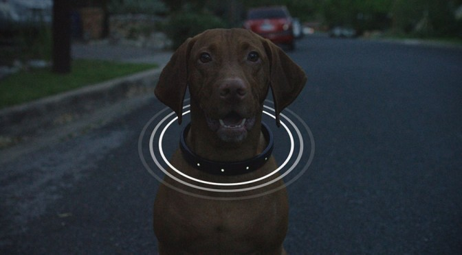 All-in-One Smart Dog Collar by DogTelligent