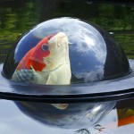 Floating Fish Dome, Because Fishes Need a View of the Outside World Too