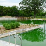 North Minneapolis Opens First Public Natural Swimming Pool in the U.S.