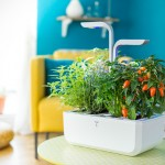 Veritable Autonomous Indoor Garden: Setup, Wait To Harvest