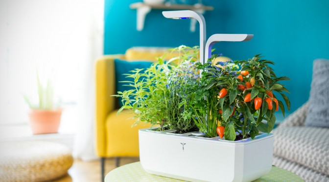 Veritable Autonomous Indoor Garden: Setup, Wait To Harvest