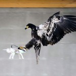 Dutch Police Thinks Eagles May Be The Answer To Errand Drones