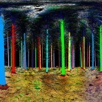 "Tree-Monitoring ""Laser Radar"" Paints Forest In Enchanting Colors"