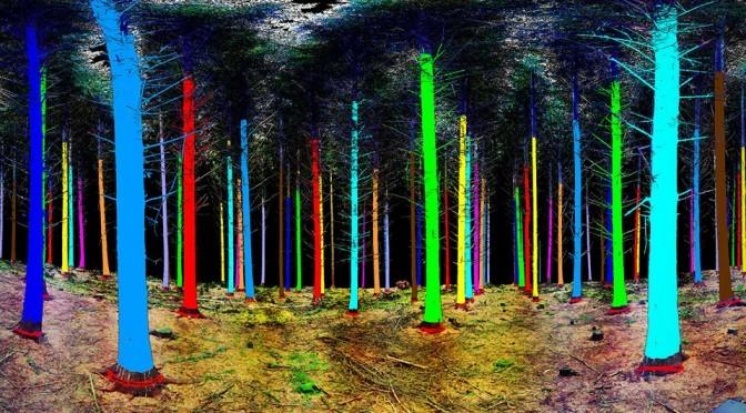 Treemetrics 3-D Laser Scan Forest Monitor