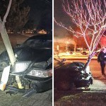 "Woman Caught Driving A Lincoln With A 15-Foot Tree ""Hood Ornament"""