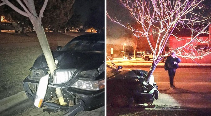 """Woman Caught Driving A Lincoln With A 15-Foot Tree """"Hood Ornament"""""""