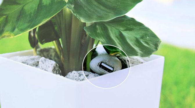 Potted Plant That Charges Your Phone Takes Going Green To A New Level