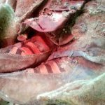 Wait, What? A 1,500-Year-Old Mummy Found Wearing Adidas Sneakers?