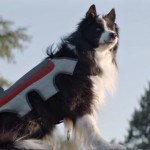 This Dog Vest Lets Your Dog Take Photos And Share Them On Facebook
