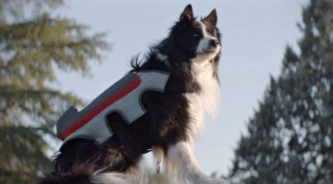 Posting Tail Dog Vest by Pedigree Spain
