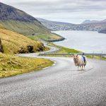 The World Has Google Street View, Faroe Islands Has SheepView 360