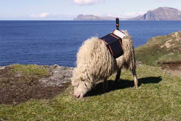 The Faroe Islands SheepView 360 Street View